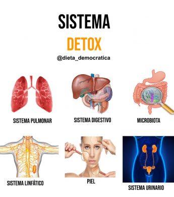 Detox y pro detox: dos conceptos clave